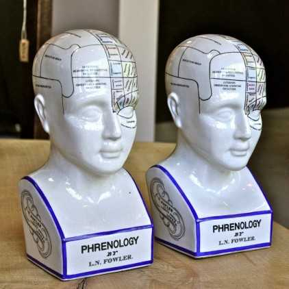 Porcelain Phrenology heads (reproduction)